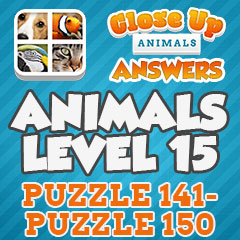 Close Up Animals Answers Close Up Pics Answers Close Ups Cheats